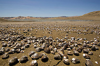 GUSTINE, CA - JULY 16:   Shells are seen along the shore of the San Luis Reservoir on July 16, 2007 in Gustine California. California Governor Arnold Schwarzenegger stressed the importance of a comprehensive water plan as the current system is not prepared to handle the population growth projected for the next 50 years. The reservoir which is filled to just 20.797 of capacity and is down 186 feet from normal levels supplies water for the Silicon Valley, Central Valley farms and Southern California homes and businesses.  (Photograph by David Paul Morris)