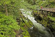 "USA, Alaska,Ketchikan,Tourists enjoy the beautiful scenery of Ketchikan Creek which runs under Ketchikan's historic ""Creek Street"""