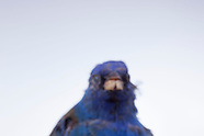 Birds_Folder