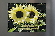 Photo magnet with sunflowers, Walt Whitman quote, bee, flowers, words to inspire, Santa Monica, California, home art, fridge art, Los Angles, Southern CA.