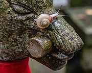 """Snail crawling on nose of fox (kitsune) sculpture at Fushimi Inari Taisha, Shinto shrine, Kyoto, Japan. Foxes (kitsune), regarded as messengers, are often found in Inari shrines. Fushimi Inari Shrine (Fushimi Inari Taisha) is an important Shinto shrine. Bright vermilion Senbon Torii (""""thousands of torii gates"""") straddle a network of trails behind its main buildings. The trails lead into the wooded forest of the sacred Mount Inari (233 meters). Fushimi Inari is the most important of several thousands of shrines dedicated to Inari, the Shinto god of rice. Foxes are thought to be Inari's messengers, honored in many statues. The shrine predates the capital's move to Kyoto in 794. The torii gates are donated by individuals and companies, as inscribed on the back of each gate. Prices for small to large gates run from 400,000 to over one million yen."""