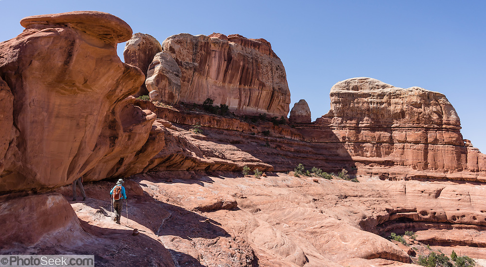 Sandstone pillars rise above a hiker on Peek-a-Boo Trail, in Needles District of Canyonlands National Park, Utah, USA. The Permian rocks of the Needles District formed where red alluvial fans from the east interwove with white dunes from the west, making spires striped red and white. This panorama was stitched from 2 overlapping photos.