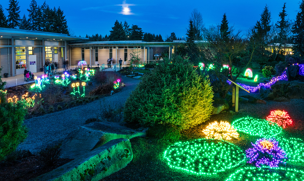New Years eve at the bellevue Botanical Garden, Garden d'Lights.<br />