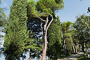 Zypressen und Pinien am See, Peschiera del Garda, Gardasee, Venetien, Italien | Cypress and pine trees at the lake, Peschiera del Garda, Lake Garda, Veneto, Italy
