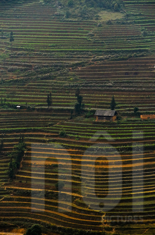 A house in the middle of terrace plantations in Bac Ha district, Lao Cai province, North Vietnam.