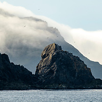 Albatross fly over the rocky cliffs at Elsehul, a bay on the northwest coast of South Georgia Island.