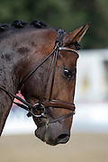 Mia Runesson - Faustino 27<br /> FEI World Breeding Dressage Championships for Young Horses 2012<br /> © DigiShots