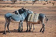 First prize at PX3 2009 Prix de la Photographie | People's Choice<br />