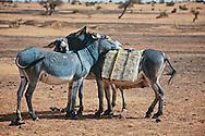 First prize at PX3 2009 Prix de la Photographie | People's Choice<br /> Categorie: Advertising | Self promotion<br /> <br /> Donkeys resting after a long walk in salt caravan<br /> Mali, 2009