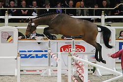 Gigolo van de Padenborre<br /> BWP Hengstenkeuring Moorsele 2009<br /> Photo © Hippo Foto