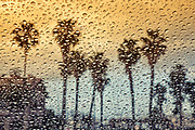 Image of palm trees in the rain, San Pedro, California, America west coast