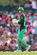 Melbourne Stars player Peter Handscomb at the Big Bash League cricket match between Sydney Sixers and Melbourne Stars at The Sydney Cricket Ground in Sydney, Australia