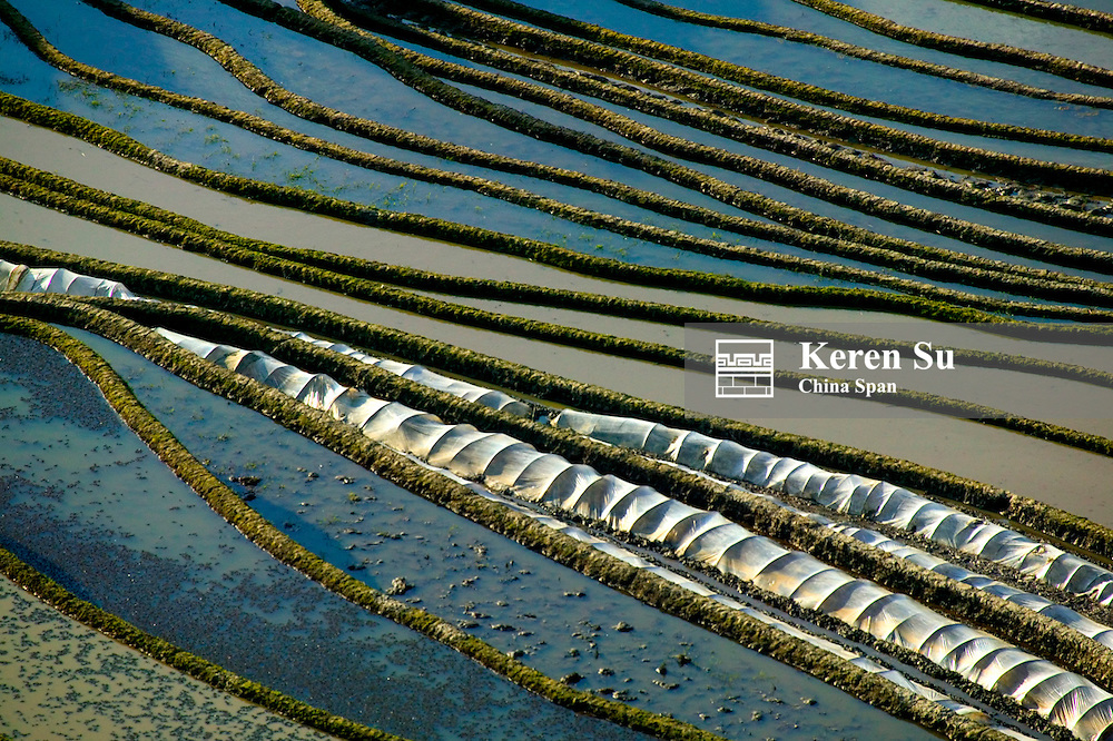 Water filled rice terraces in the mountain, Yuanyang, Yunnan Province, China