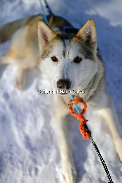 Wilderness husky sledding taiga tour with Bearhillhusky in Rovaniemi, Lapland, Finland