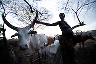A woman tends to her cattle at dusk. For many South Sudanese, cattle are the most important thing on earth. A woman is often viewed as worth less than cattle.