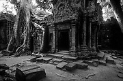 Ruins at Ta Prohm at Angkor.