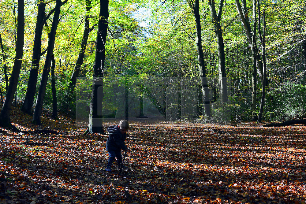 © Licensed to London News Pictures. 04/11/2013. Burnham, UK A young boy plays with a stick in the mud. Autumn sunshine through the trees at Burnham Beeches, South Buckinghamshire on MONDAY 4TH NOVEMBER. The beeches covering 220 hectares is primarily noted for its ancient beech and oak pollards. Photo credit : Stephen Simpson/LNP