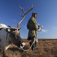 Sept 2009 Yamal Peninsula, Siberia, Russia - global warming impacts story on the Nenet people , reindeer herders in the Yamal Peninsula Andrei Ysengi