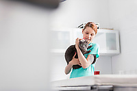 Doctor carrying Russian blue cat at veterinary clinic