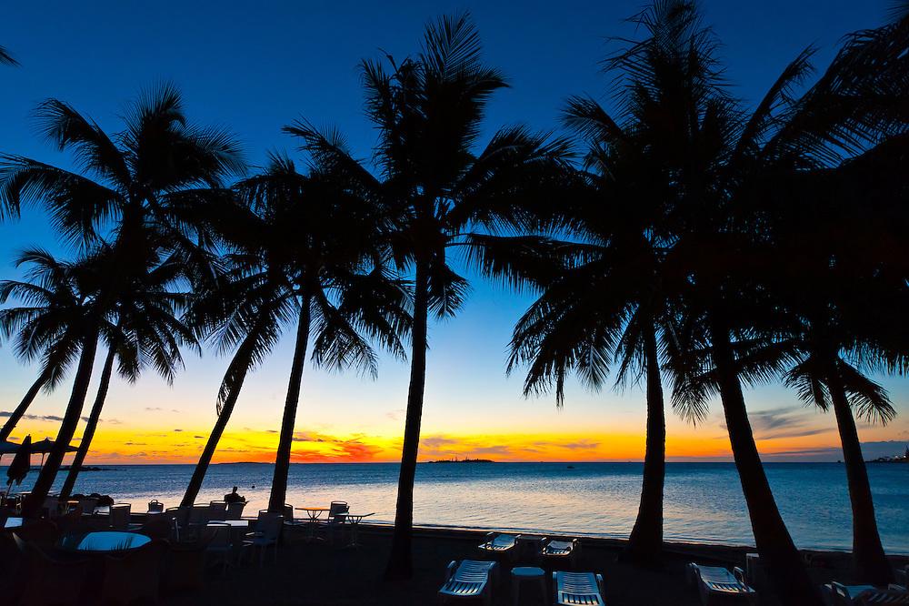 Palm trees, Le Meridien Nouméa Beach Resort Hotel, Anse Vata Beach, Noumea, Grand Terre, New Caledonia