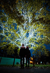 © Licensed to London News Pictures. 21/11/2017. London, UK. Visitors admire an illuminated tree at the opening of Christmas at Kew at Royal Botanical Gardens, Kew. The spectacular displays are illuminated by over one million tiny twinkling lights placed all over Kew Gardens - open Wednesdays – Sundays from 22 November 2017 – 2 January 2017. London, UK. Photo credit: Peter Macdiarmid/LNP