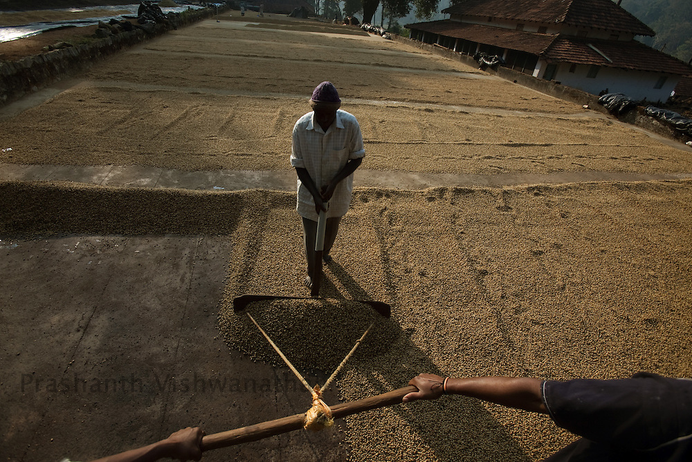 "Labourers dry coffee beans processed through ""Wet"" process at a drying field in Coorg, India,  on Sunday January 31, 2010. Photographer: Prashanth Vishwanathan/Bloomberg News"