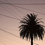 Single palm tree silhouetted against magenta sunset sky and array of power lines in residential neighborhood. No horizon line..