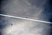 Nederland, the Netherlands, Schaarsbergen, Deelen, 5-10-2018 Een gecombineerde oefening met helikopters en infanterie van de strijdkrachten van Duitsland en Nederland. De grootschalige oefening FALCON AUTUMN 2018 is in volle gang. Op de aankomst- en vertreklocatie van FALCON AUTUMN de terugkeer van helikopters met daarin een Duitse luchtmobiele compagnie na een Air Assault-oefenoperatie. Tevens een oefensprong van de luchtmobiele Pathfinders, die een vrije-val-parachutesprong doen die zij later bij nacht boven het militaire oefenterrein Marnewaard uitvoeren. Ook wordt op het vliegveld een Cargo Delivery Drop vanuit een transportvliegtuig uitgevoerd, waarbij een aantal pallets materieel per parachute op het veld landen. Foto: Flip Franssen
