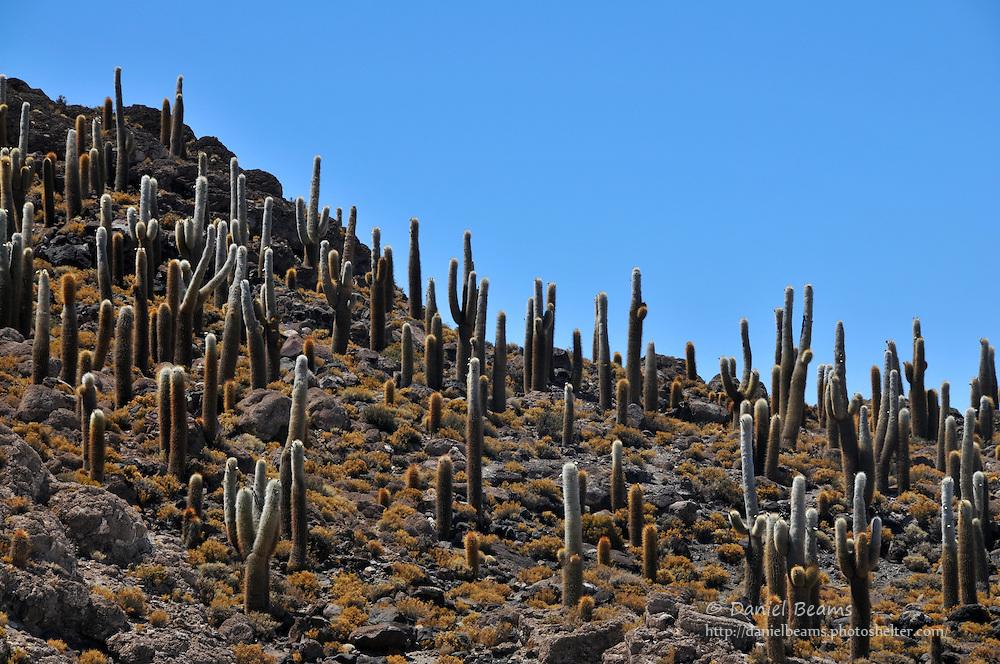 Fish Island, Inca Huasi, on the Salar de Uyuni, Bolivia