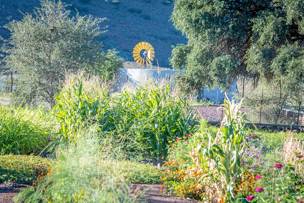View of a lush garden and windmill on Dabis Guest Farm in Helmeringhausen, southern Namibia, Africa.