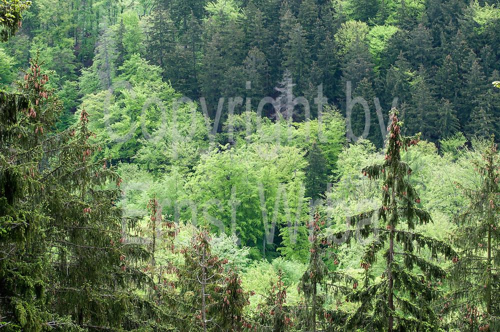 Wald, lIsenburg, Harz, Sachsen-Anhalt, Deutschland | forest, Ilsenburg, Harz, Saxony-Anhalt, Germany