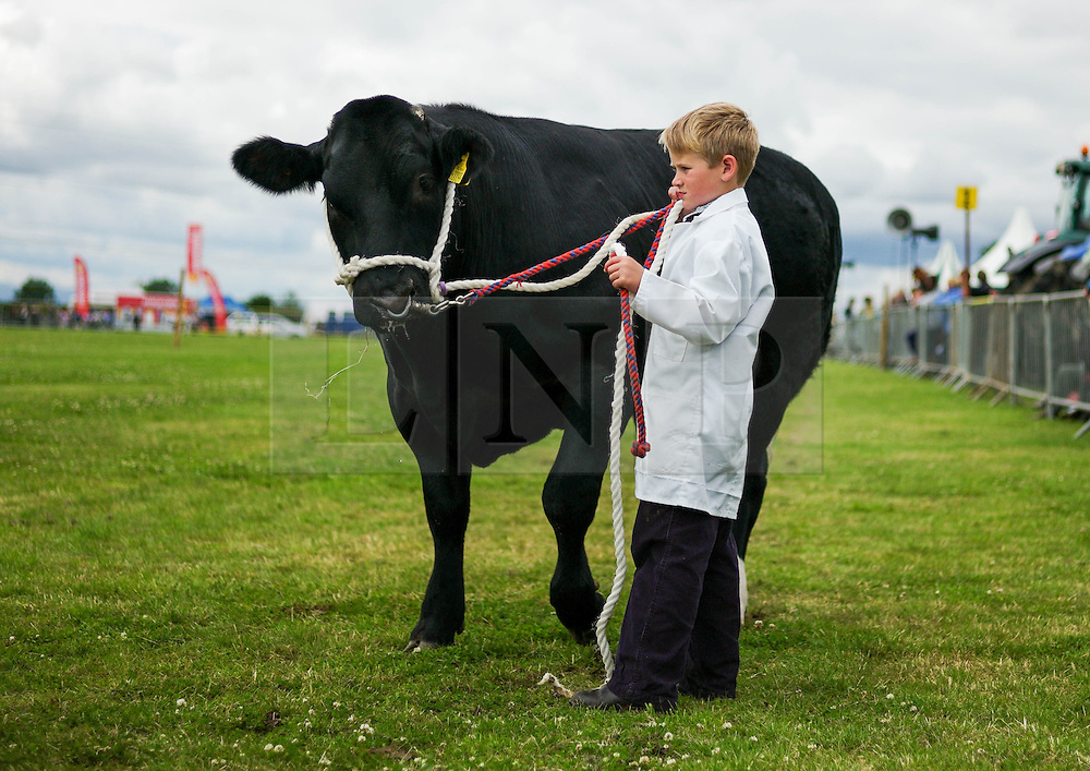 &copy; Licensed to London News Pictures.29/07/15<br /> Borrowby, UK. <br /> <br /> A young boy stands with his cow during judging at the Borrowby Country Show and Gymkhana in North Yorkshire.<br /> <br /> Photo credit : Ian Forsyth/LNP