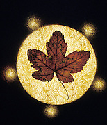 leaf in a circle of golden light