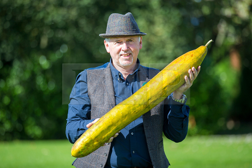 © Licensed to London News Pictures. 13/09/2019. Harrogate UK. Graham Barratt with his winning longest cucumber measuring 92cm at the giant vegetable competition at the Harrogate Flower Show in Harrogate today in Yorkshire. Photo credit: Andrew McCaren/LNP