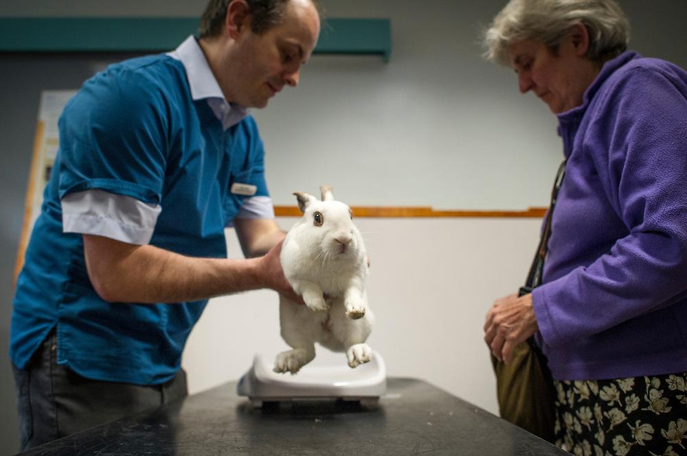 Pet rabbit during a consultation at Rushcliffe Veterinary Centre, West Bridgford, Nottingham NG2 7LR.<br /> Photo: Ed Maynard<br /> 07976 239803<br /> www.edmaynard.com