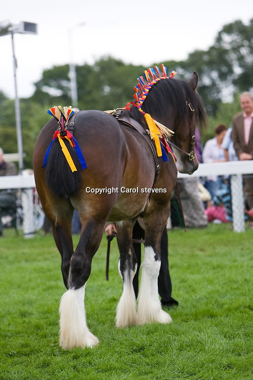 Great Yorkshire Show 2010<br /> Mr R Sumner and Wheathead Regent <br /> 2 year old bay colt