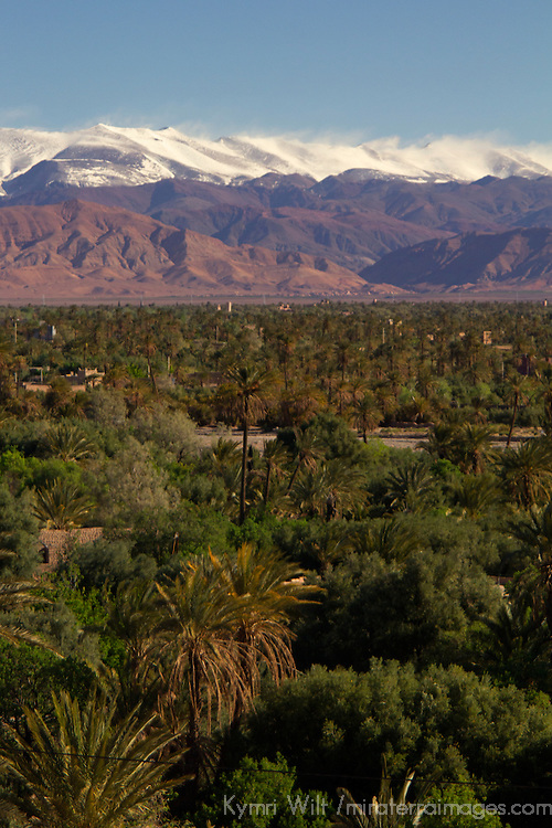 Africa, Morocco, Skoura. Landscape of Skoura oasis, with backdrop of snow-capped Atlas Mountains.