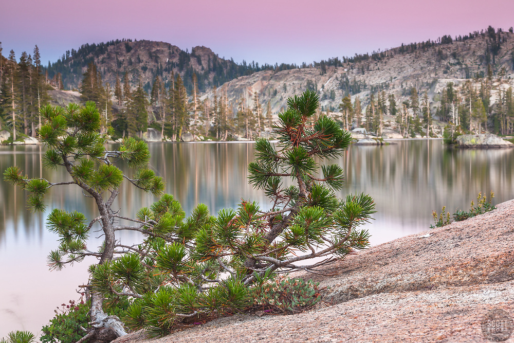 """Paradise Lake Sunset 8"" - This little pine tree was photographed at sunset along the shore of Paradise Lake, California."