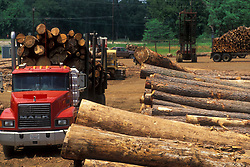 Stock photo of stacks of logs lined up ready for transport