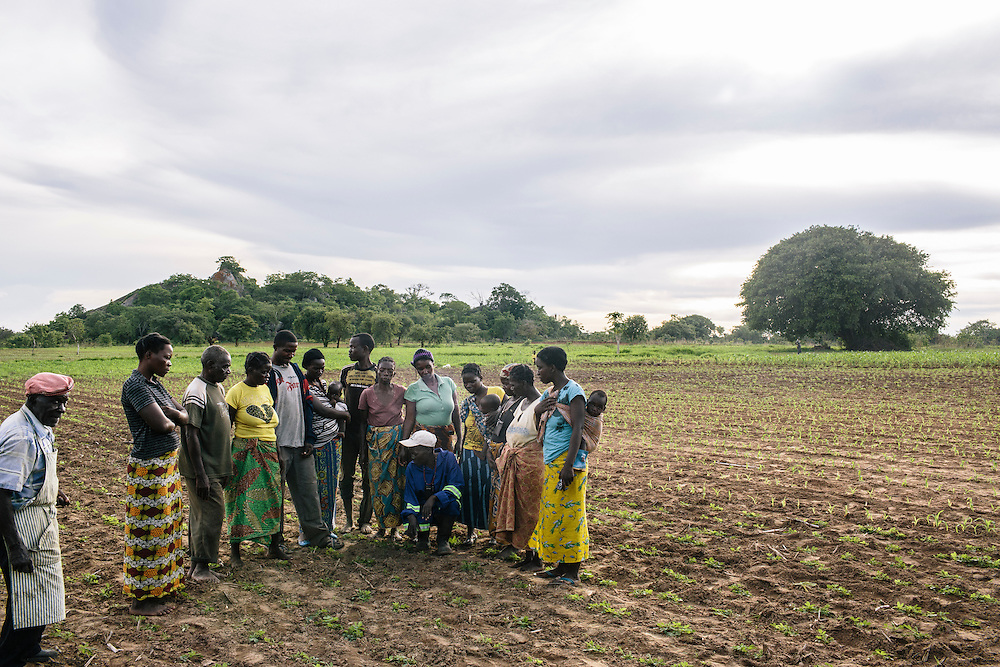 Grace Zulu, in blue jumpsuit, a community agriculture dealer, teaches local farmers how to spread fertilizer on her demo plot at Chnini agriculture camp in Chakuwawa village, Zambia. Grace explained the benefits of the fertilizer, which helps the crops retain water, so even during dryer wet seasons, the crops will survive. Using the certified seeds also produces a larger yield and when combined with other local farmer's harvest, can fetch a higher price from buyers. The extra money that Zulu has made since using the modern farming techniques has been used to buy her cows and iron siding for her house.