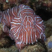 Marine Life | Ambon