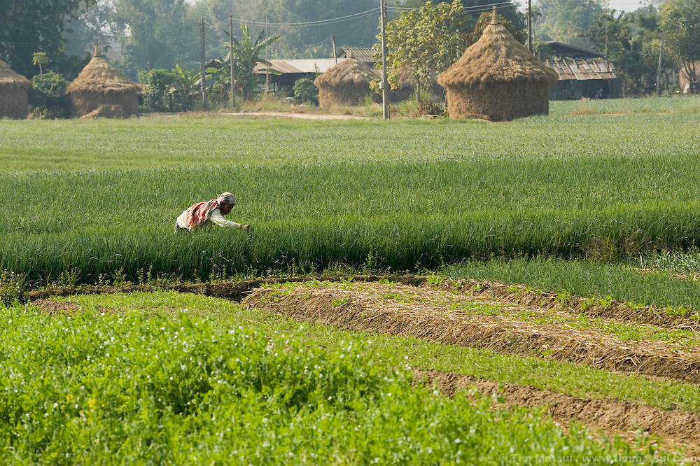 A farmer near Mae Sai, Thailand, on the Thai/Burma border.
