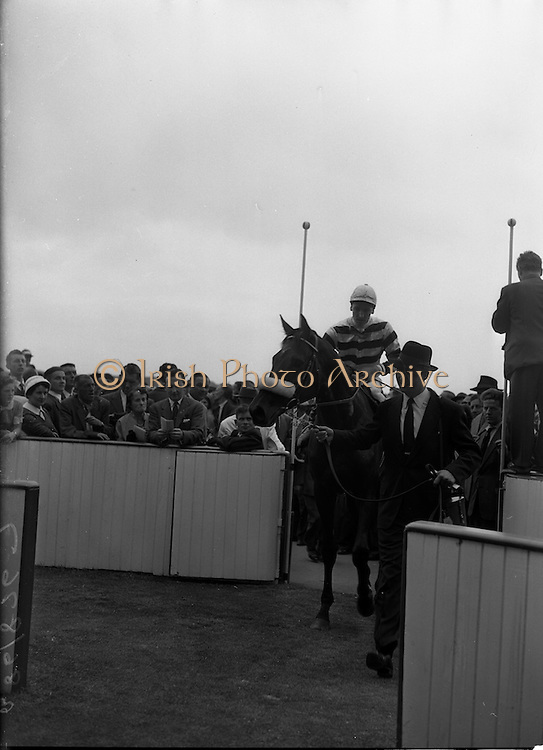 """24/06/1959<br /> 06/24/1959<br /> 24 June 1959<br /> Irish Derby  at the Curragh Racecourse. Picture shows Mr G.A. Oldham leading his horse """"Fidalgo"""", Joseph Mercer up and trained by H. Ragg, after he had won the Derby."""