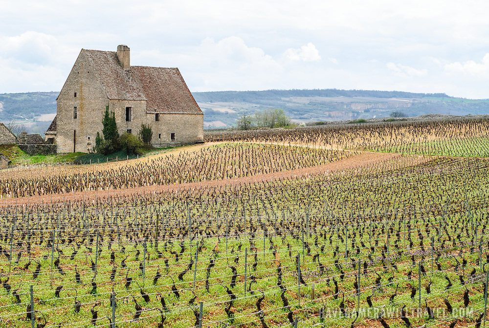 A stone farm house set amidst the freshly pruned vines of a vineyard near Baeaune in the French region of Burgundy (Bourgogne), a region famous for its pinot noir wines.