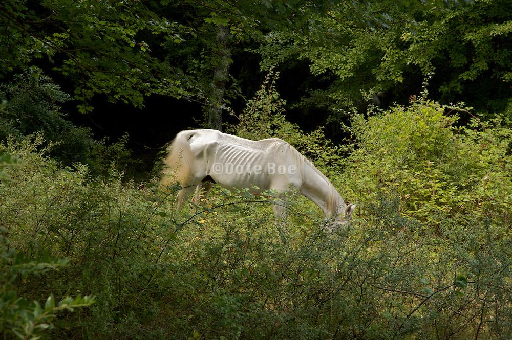 malnourished or sick horse