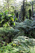 Fern Gully, Watagan Mountains