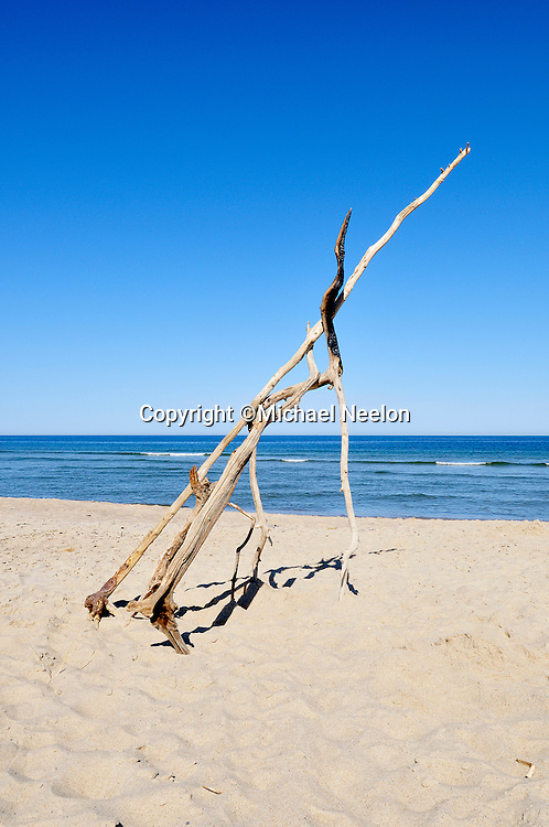 Driftwood branches on Coast Guard Beach, Cape Cod National Seashore, Eastham, Massachusetts