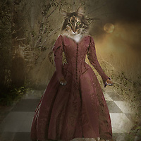 cat animal in a red dress in woods