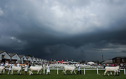 © Licensed to London News Pictures. <br /> 08/07/2014. <br /> <br /> Harrogate, United Kingdom<br /> <br /> As dark clouds gather cattle are led around a display arena during the first day of the Great Yorkshire Show. The show is England's Premier Agricultural Event and is based on the 250-acre Great Yorkshire Showground near Harrogate. The Main Ring is the hub of the Show providing a setting for international show jumping and world class cattle parade. The showground is filled with animals, country demonstrations, have-a-go activities and rural crafts.<br /> <br /> Photo credit : Ian Forsyth/LNP