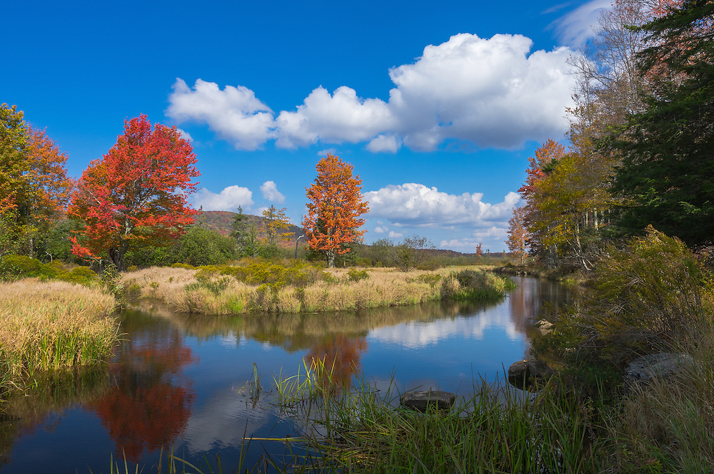 Red maple and golden yellow grass along the glassy smooth Blackwater River provide the idyllic landscape on a partly cloudy autumn day in Canaan Valley, West Virginia.